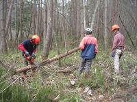 森林保全チームによる支障木・危険木伐倒処理の様子