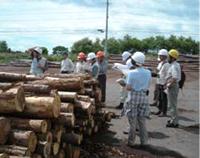 木材市場見学会・松枯れ病学習会の様子